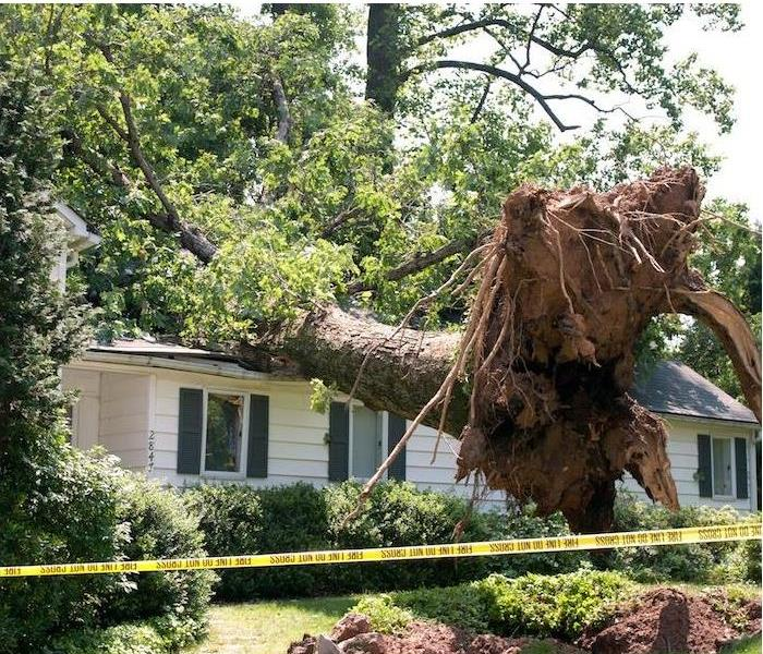 severe roof damage from a large tree landing on white house